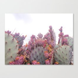 Santa Rita Cactus Canvas Print
