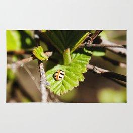 Little Ladybug Photography Print Rug