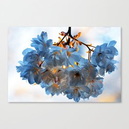 SPRING BLOSSOMS - IN BLUE Canvas Print