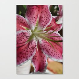 Stargazer Lily Canvas Print
