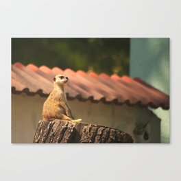 Meerkat Funny Observer #decor #society6 Canvas Print