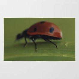 Ladybird on a Flower, macro photography, home, still life, fine art, animal love, nature photo Rug