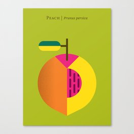 Fruit: Peach Canvas Print