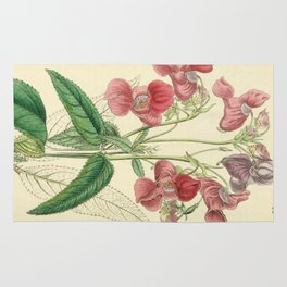Edwards' botanical register Rug