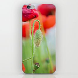 Tender shot of red poppies on the field over blue sky iPhone Skin