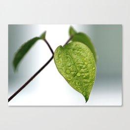 Raindrop Leaves Canvas Print