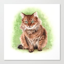 Somali cat portrait Canvas Print