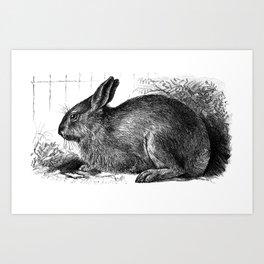 Garden Bunny Art Print