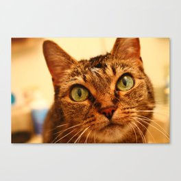 Cute Tibbs Canvas Print