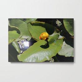 Lily pad waiting to blossom Metal Print