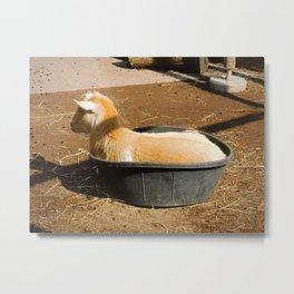 Baby in a bucket Metal Print