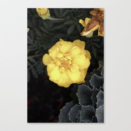 The Soft Yellow Flower (Vintage) Canvas Print