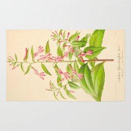 Lobelia Ghiesbreghtii Vintage Botanical Floral Flower Plant Scientific Illustration Rug