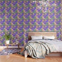 Colorado Columbine Flower Wallpaper