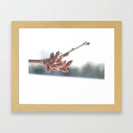 Snow Buds Framed Art Print