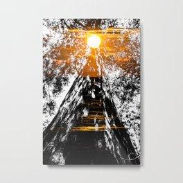 Suntree Metal Print