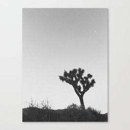 JOSHUA TREE VII / California Canvas Print