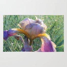 Iris In June Rug