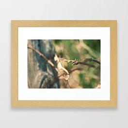Texas Rust Framed Art Print