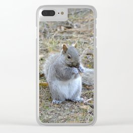Gray Squirrel Munching on Pine Cones Clear iPhone Case