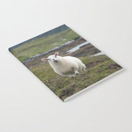 The prettiest sheep Notebook