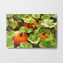 Harvest Seasion Metal Print