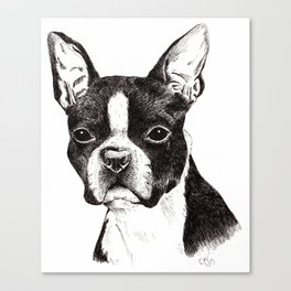 Boston Terrier Portrait Canvas Print