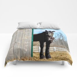 Percheron Horse by Teresa Thompson Comforters