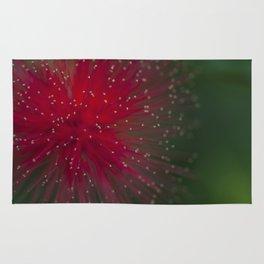 Macro photograph of the Calliandra flower. Rug