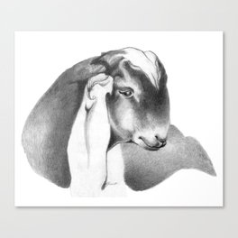 Anglo Nubian Buck Kid 2 Canvas Print