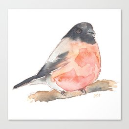 Clarence the Bullfinch Canvas Print