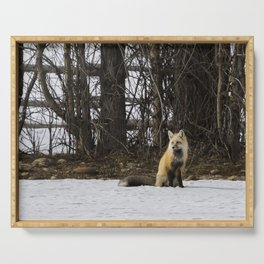 Beautiful Red Fox - No. 4 Serving Tray