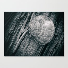 Time in a shell Canvas Print