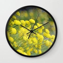 Santolina Rosmarinifolia Wall Clock