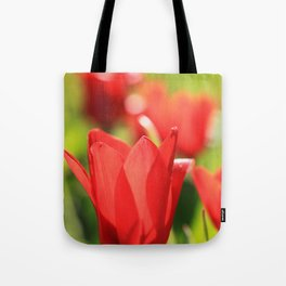 Red tulips in backlight 3 Tote Bag
