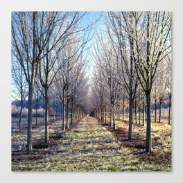 Orchard Rows Canvas Print