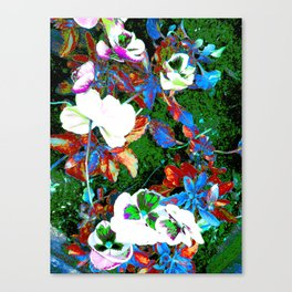 Vines of the Sole Canvas Print