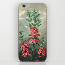 Pink Floral The Narrow-leaved Kalmia : Temple of Flora iPhone Skin