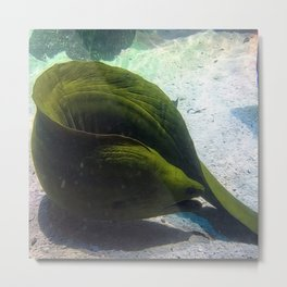 Big Green Eel Chilling out Metal Print