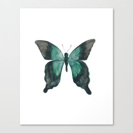 Butterfly - Nature Study #1 Canvas Print