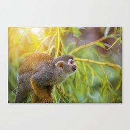 Squirrel Monkey wild animal in sunlight Canvas Print