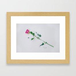Pink rose immersed in purple colored milk Framed Art Print