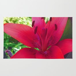 Red Lily Rug