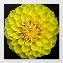 Yellow Dahlia On Black Canvas Print