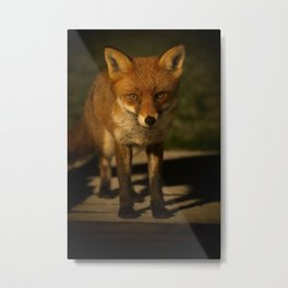 The Wild Red Fox Metal Print