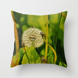 Last Dandelion in Sunlight Throw Pillow