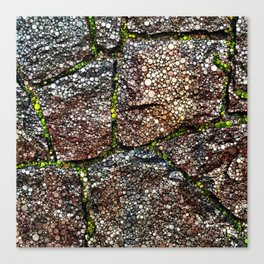 Rock Wall with Moss Abstract Canvas Print