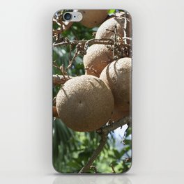 Cannonball Fruit iPhone Skin