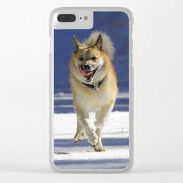 IcelandicSheepdog20150402 Clear iPhone Case