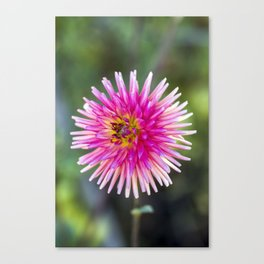 Dahlia In The Garden / 41 Canvas Print